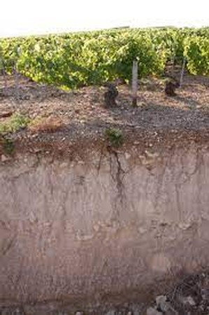 BURGUNDY TERROIR: SOIL (DEEP vs. ROCKY LIMESTONE)