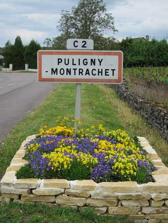DISCOVER PULIGNY MONTRACHET MIXED WHITE CASE